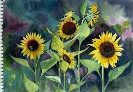 sketching sunflowers u2026part 3 wip karen u0027s nature art