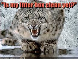 Clean Animal Memes - animal capshunz clean funny animal pictures with captions