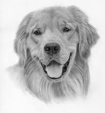 drawing lesson how to draw a golden retriever