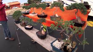 Pots For Sale Bonsai Trees For Sale Youtube
