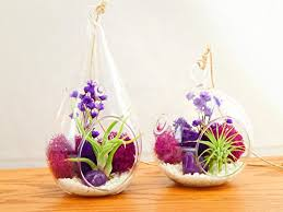 bliss gardens air plant terrarium with moss flowers and agate