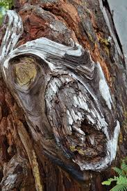 tree face photos all the best tree faces talking trees for halloween