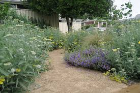 native plant garden native plant garden tours in la the kind life