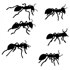 photo collection ant sketch by seaturtlehorsesnake