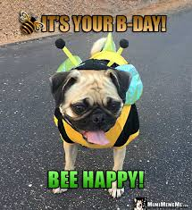 Happy Birthday Pug Meme - pug happy bee day happy birthday from funny pug in bee costume pug