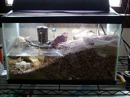 diy hermit crab habitat petdiys com