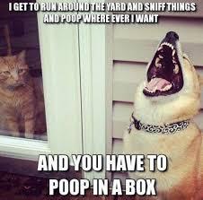 Clean Humor Memes - animal humor dog humor cat humor pet humor clean joke litter