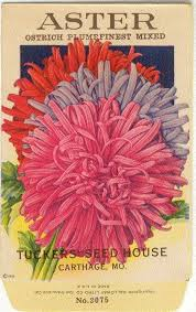 flower seed packets 102 best vintage flower seed packets images on seed
