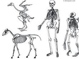 4 designer various animal human skeleton sketch vector material