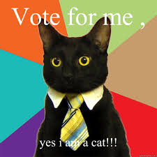 Vote For Me Meme - vote for me yes i am a cat meme cat planet cat planet