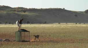 moving cheetahs out of danger u2013 national geographic society blogs