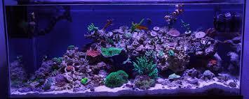 stunner led aquarium light strips full spectrum led tank pictures page 67 lighting forum nano