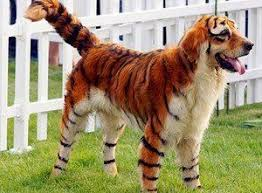 costumes for large dogs tiger1 new trend involves