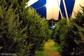 hart t tree christmas tree lot fort lauderdale florida sanctuary