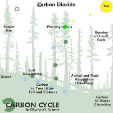 carbon storage in trees yukonenvirothon