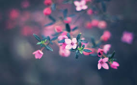 Cute Flower Wallpapers - cute pink flower photography 6950267