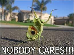 Nobody Cares Meme - nobody cares image macros