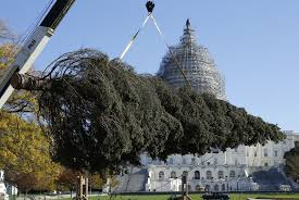alaska ships a capitol tree with all of the trimmings npr