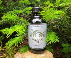 balsam tree balsam fir woodland essence