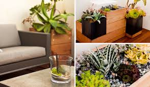 go native 6 plants and design tips for your san francisco home