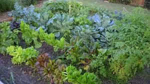 gardening six laws of plant growth beginning a vegetable garden