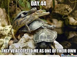 Alligator Meme - turtles on alligators