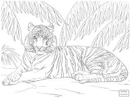 Mammals Tigers Baby Tiger Tigers Coloring Pages Azcoloring4you Com Coloring Pages Tiger