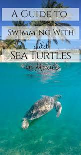 the 25 best akumal mexico ideas on pinterest riviera maya