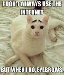Internet Meme Cat - eyebrow cat know your meme