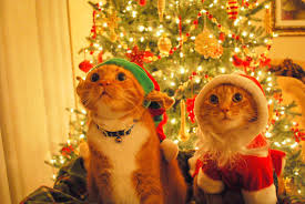 cat christmas 17 confessions from christmas tree loving cats