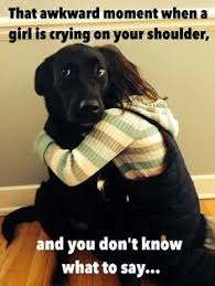 Black Lab Meme - how about a dog lover s thread page 149 us message board