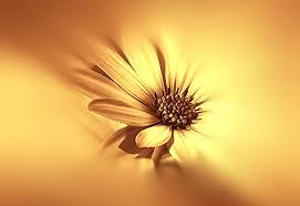 Flowers For Morning Sun - flowers flower sun good morning yellow new hd wallpaper flowers