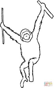 orangutan coloring pages getcoloringpages com
