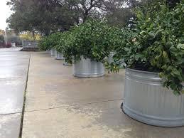 garden galvanized water trough water troughs horse trough tub