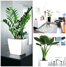 decor plants home decorative house plants plants decor most decorative house plants