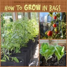 grow a container vegetable garden in grow bags homestead