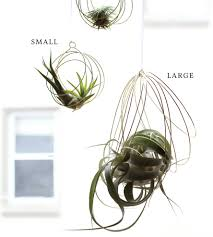 plants air plant decor inspirations air plant wall decor