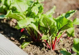 creative tips for starting your own urban garden