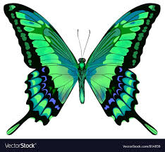 beautiful butterfly royalty free vector image vectorstock