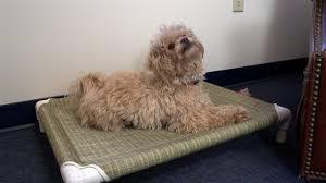 Homemade Dog Beds Diy Dog Bed No Sew Plans Diy Dog Bed No Sew Plans U2013 Dog Bed