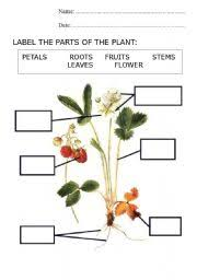parts of a plant worksheet by nuria