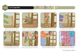 trellis bougainvillea yahoo image search results garden