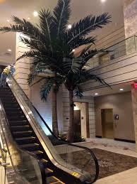 custom large specimen artificial trees preserved palms make be