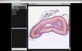 Anatomy Slides A U0026p 2 Lab Midterm Slides Youtube