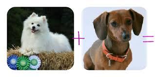 american eskimo dog tricks biography that u0027s so sno