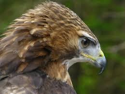wildlife holland america blog