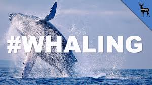 Whaling Meme - why do whales breach youtube