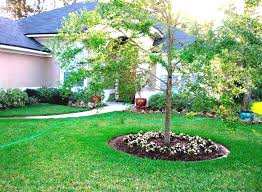 landscaping ideas around palm trees u2014 home design ideas create