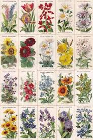 Pictures Of Gardens And Flowers Names And Illustrations Of Traditional English Cottage Garden