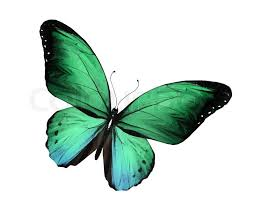 Blue And Green Butterfly - green butterfly flying isolated on white background stock photo